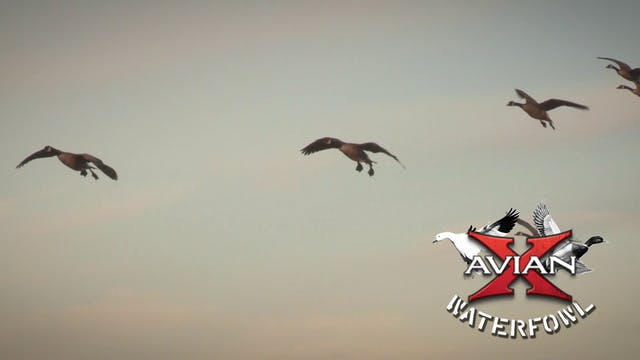 Ontario Pro Staff Hunt • Avian X Wate...