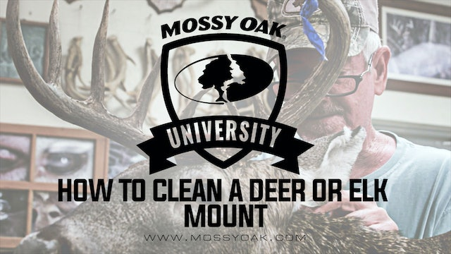 How to Clean a Deer or Elk Mount