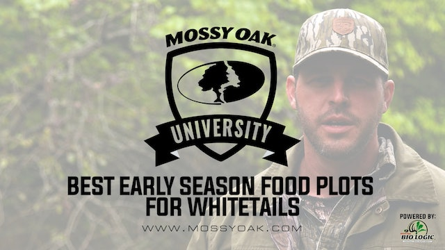 Best Early Season Food Plots for Whitetails