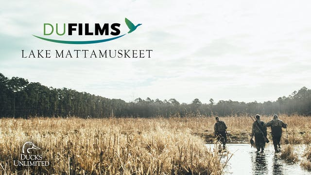 Lake Mattamuskeet  • DU Films