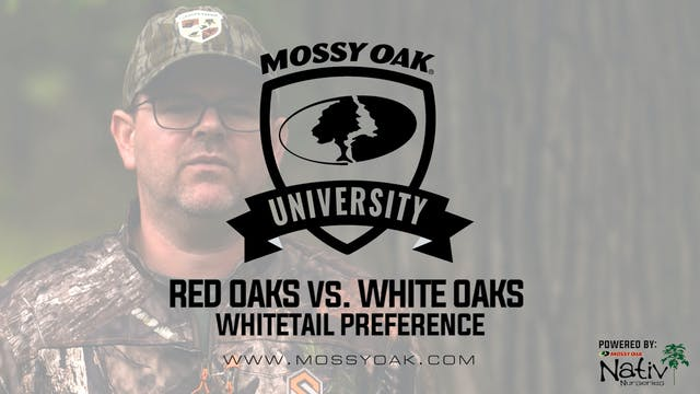 Red Oaks vs. White Oaks - What Makes ...