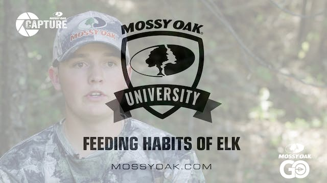 Feeding Habits of Elk • Mossy Oak Uni...