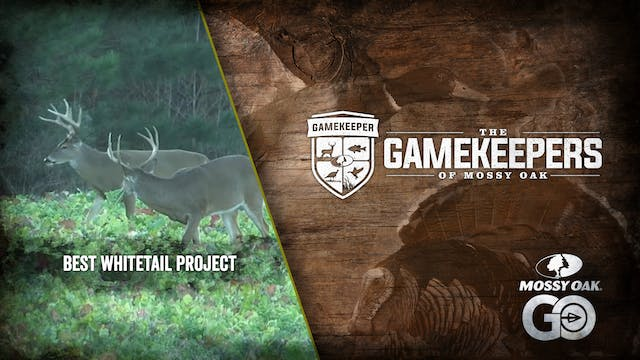 Best Whitetail Project