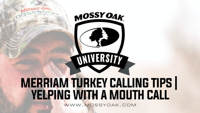 Merriam Turkey Calling Tip • Yelping with a Mouth Call
