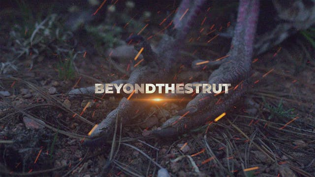 NWTF Beyond the Strut