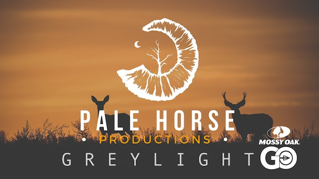 Grey Light • Pale Horse