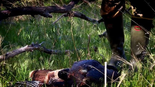 Jakes • Turkey Hunting in Kansas and Nebraska