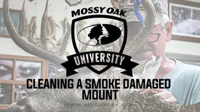 Cleaning a Smoke Damaged Mount