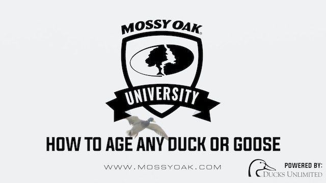 How to Age a Duck