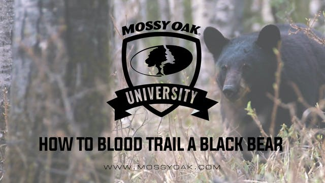 Blood Trailing Black Bears • MOU