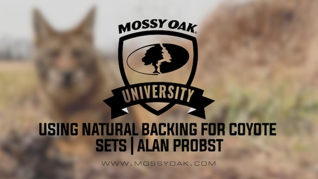Using Natural Backing for Coyote Sets with Alan Probst
