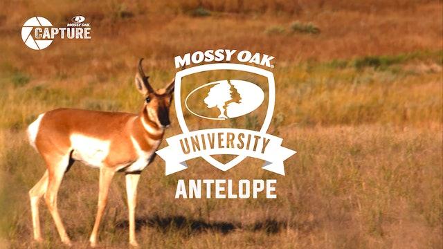 Antelope • Mossy Oak University