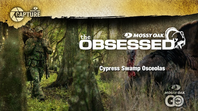 Cypress Swamp Osceolas • Turkey Hunting in the Florida Marsh