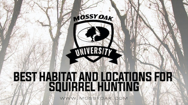 Best Habitat And Locations For Squirrel Hunting