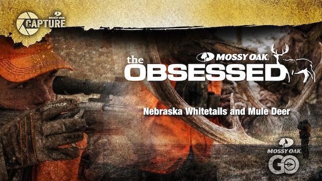 Nebraska Whitetails and Mule Deer
