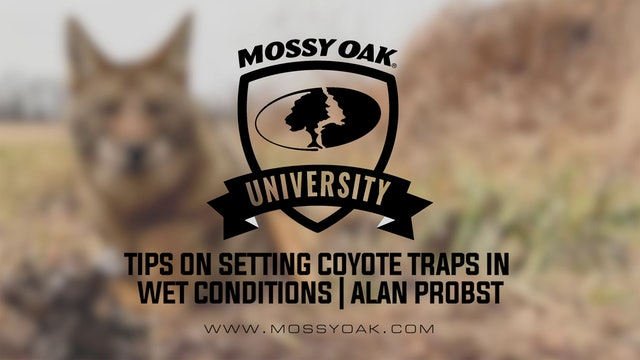 Tips on Setting Coyote Traps in Wet Conditions with Alan Probst