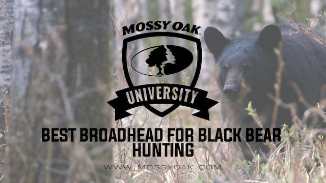 Best Broadhead To Use When Bow Hunting Black Bears • MOU