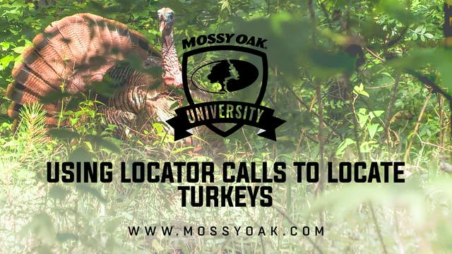 Using Locator Calls To Locate Turkeys
