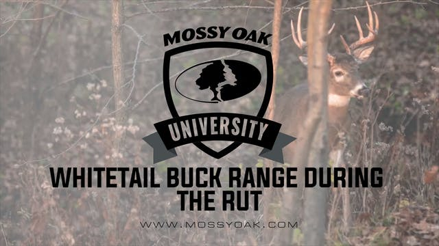 Mature Whitetail Buck Travel Range Du...