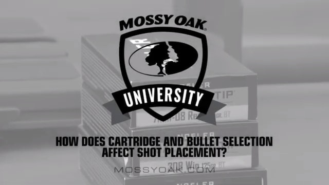 How Bullet & Cartridge Selection Affects Shot Placement