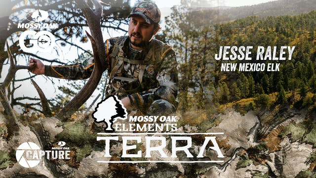 Jesse Raley New Mexico Elk • Terra