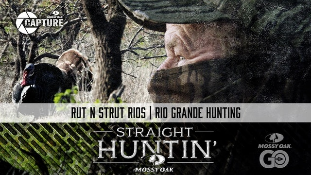 Rut N Strut Rios • Rio Grande Hunting • Straight Huntin'