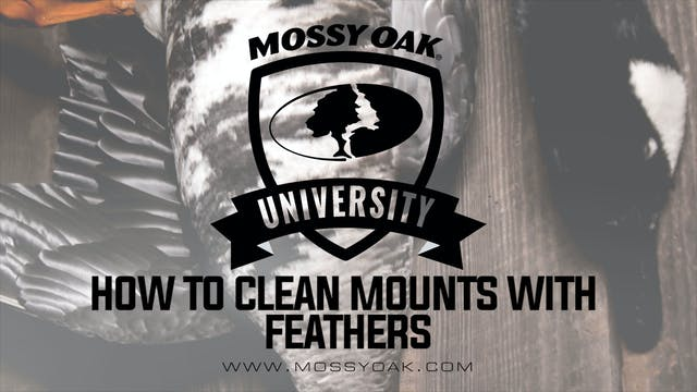 How to Clean Mounts with Feathers