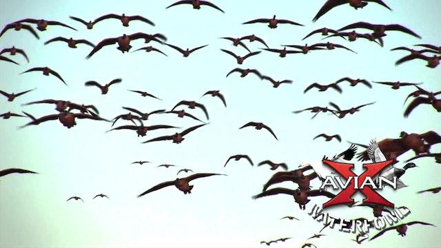 Central Flyway • Avian X Waterfowl