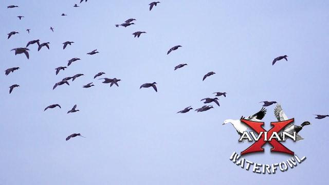 Working For Green • Avian X Waterfowl