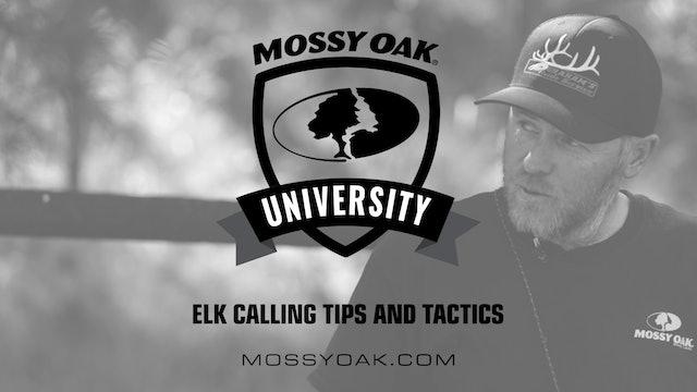Elk Hunting Tips and Tactics
