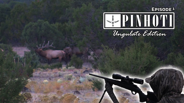 Ungulate Edition Ep1 • Pinhoti Project