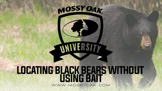 Black Bear Hunting Without Bait | Best Native Food Sources