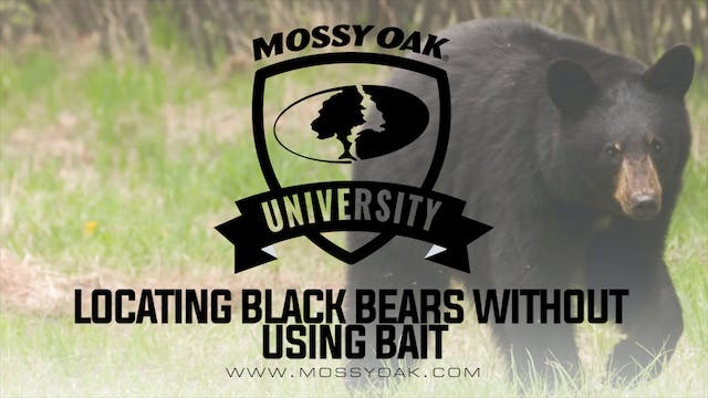 Black Bear Hunting Without Bait   Bes...