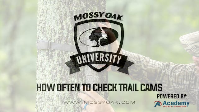 How Often To Check Trail Cams