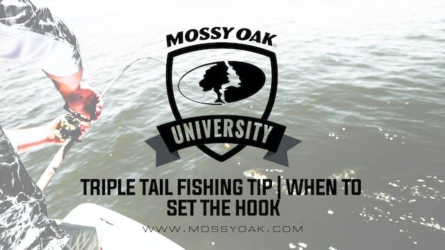 Tripletail Fishing Tip • When to Set ...