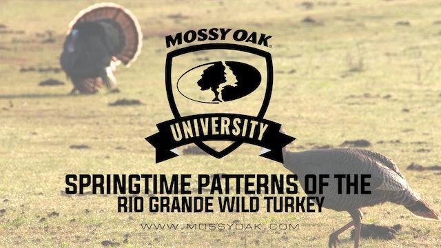 Springtime Patterns Of The Rio Grande Wild Turkey