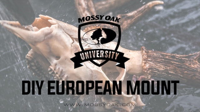 DIY European Mount - How To Euro Mount a Deer