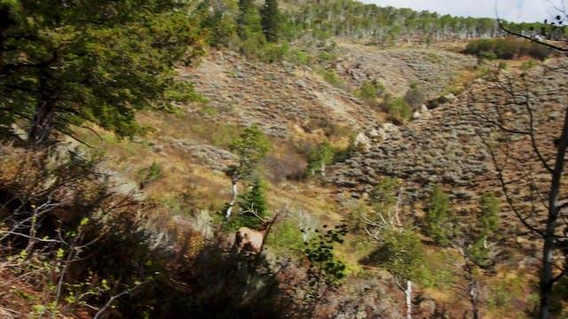 Mountain Country, Part 2 • Mule Deer ...