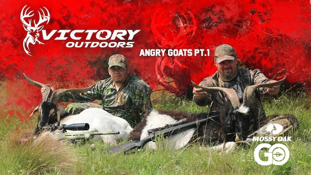Angry Goats Part 1 • Victory Outdoors