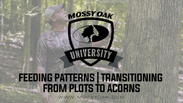 Deer Feeding Patterns • Transitioning From Plots to Acorns