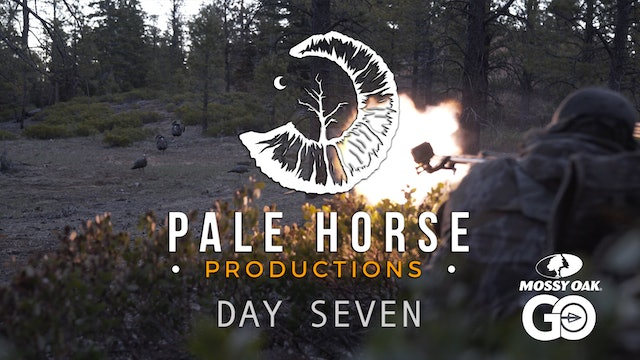 Day Seven • Pale Horse