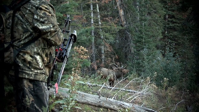 Mule Train • Rifle Mule Deer in Utah
