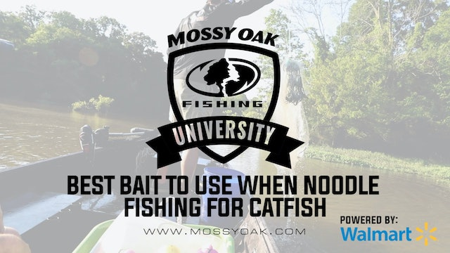 Best Bait to Use when Jug Fishing for Catfish