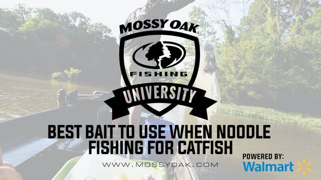 Best Bait to Use when Jug Fishing for...