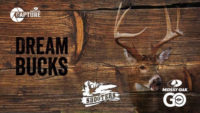 Dream Bucks • Shooters
