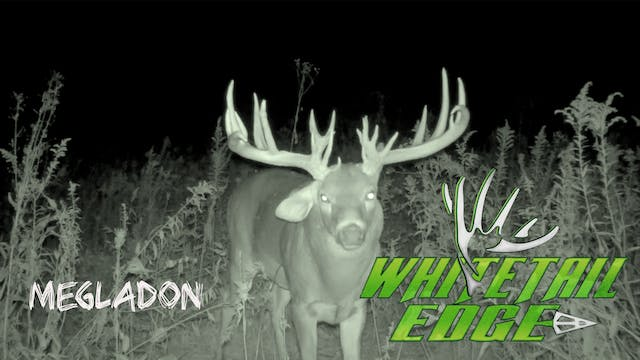 Megladon • Whitetail Edge