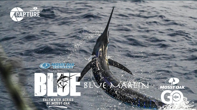 Blue Marlin • BLUE • Episode 3