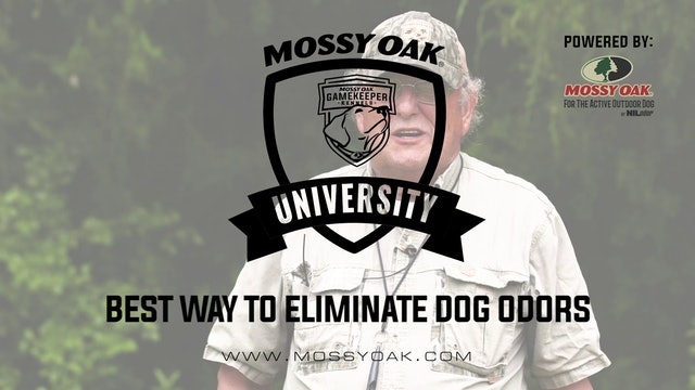 Best Way to Eliminate Dog Odors