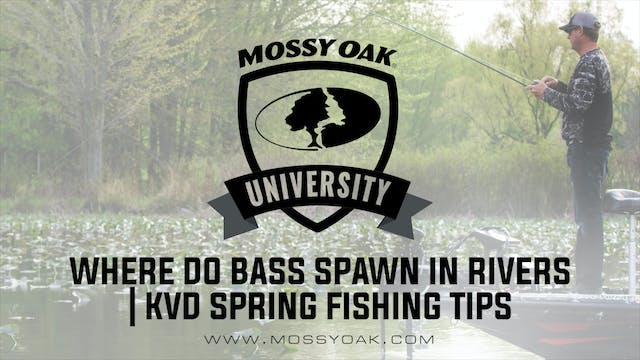 Where do Bass Spawn in Rivers • KVD S...