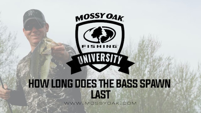 KVD - How Long Does the Bass Spawn Last